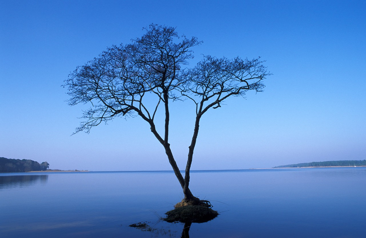 Marc — A lone tree takes root in a spot of earth in a French lake